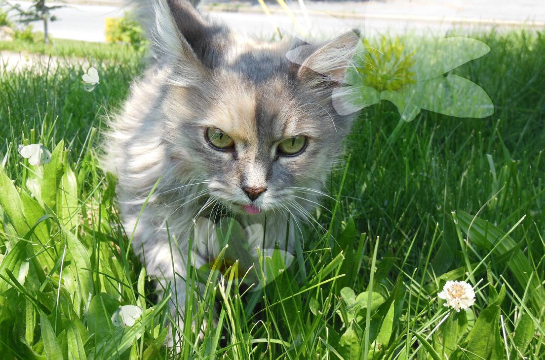Dusk in Grass